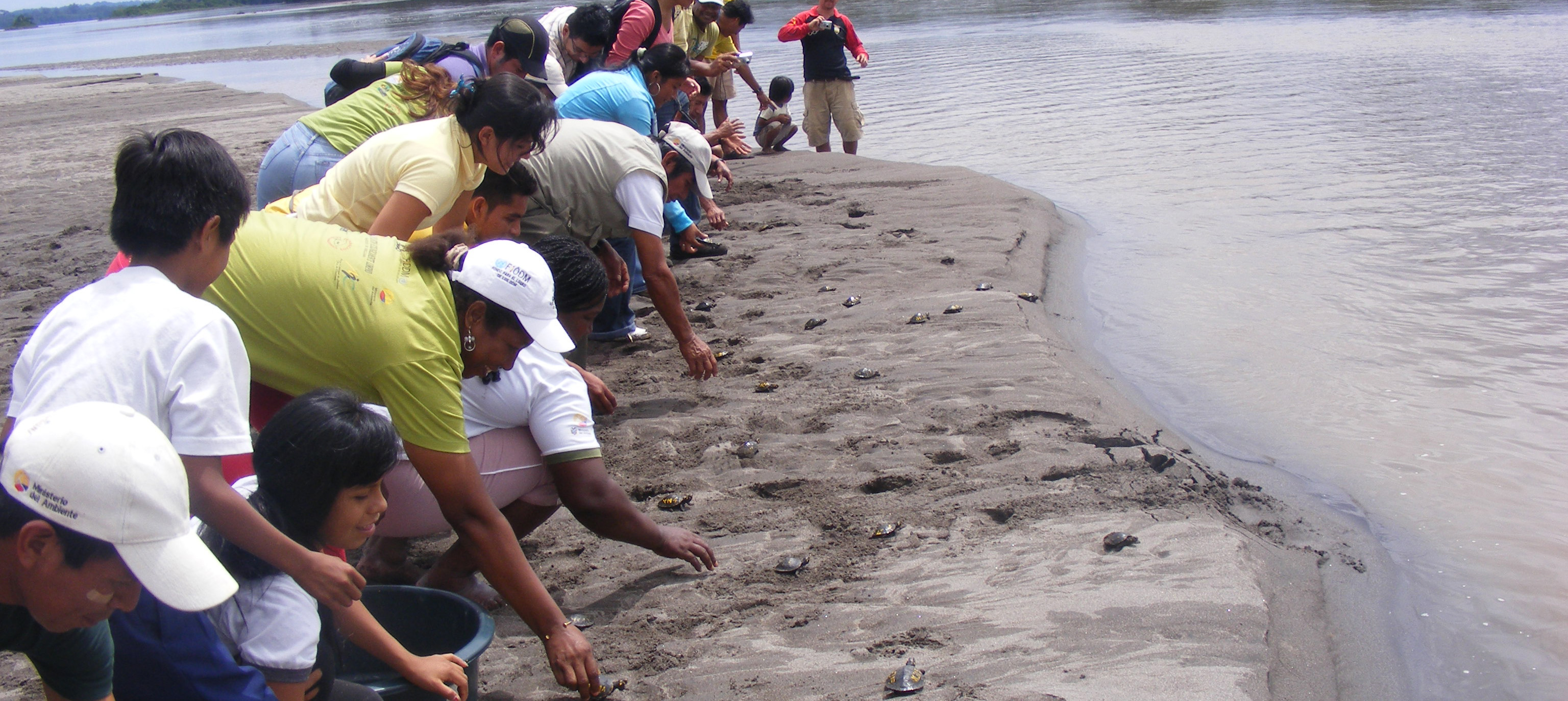 Vulnerable river turtle populations are now recovering in Ecuador