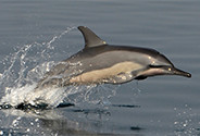 New sanctuaries for dolphins and whales